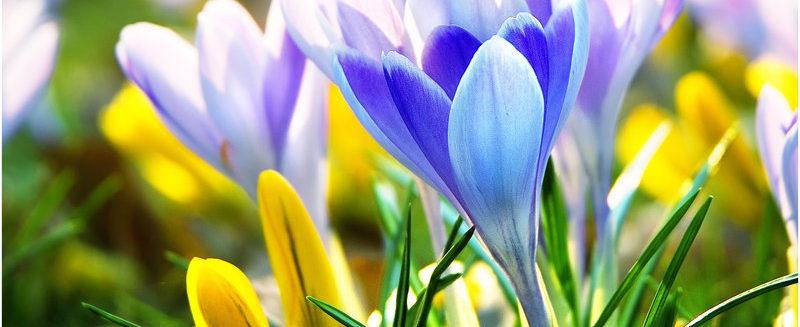 Встречаем весну!